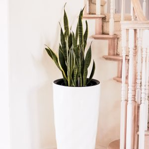 XBrand White Self Watering Planter Pot (PL3448WT)48WT_LS2