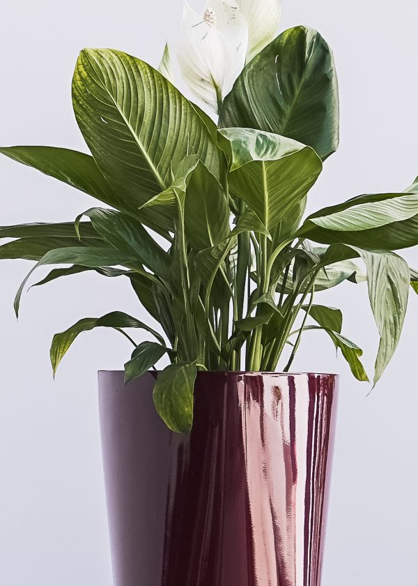 XBrand Red Self Watering Planter Pot (PL3479RD)